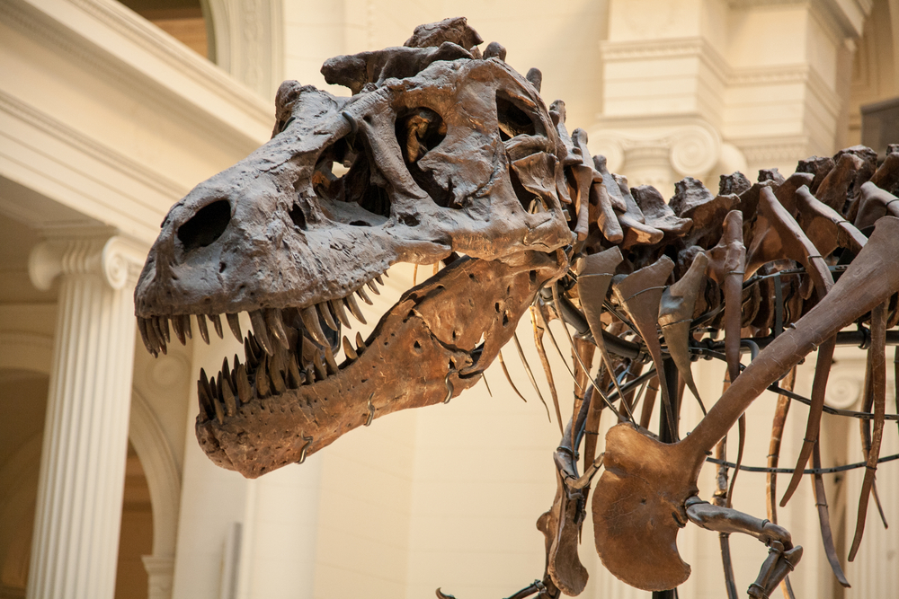 Yes – That Dinosaur Skeleton Might Be Glass or Carbon Fiber