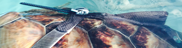 Who Knew We Could Help an Injured Sea Turtle with Carbon Fiber?